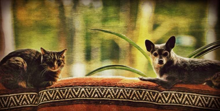 Avere un coautore: cane e gatto